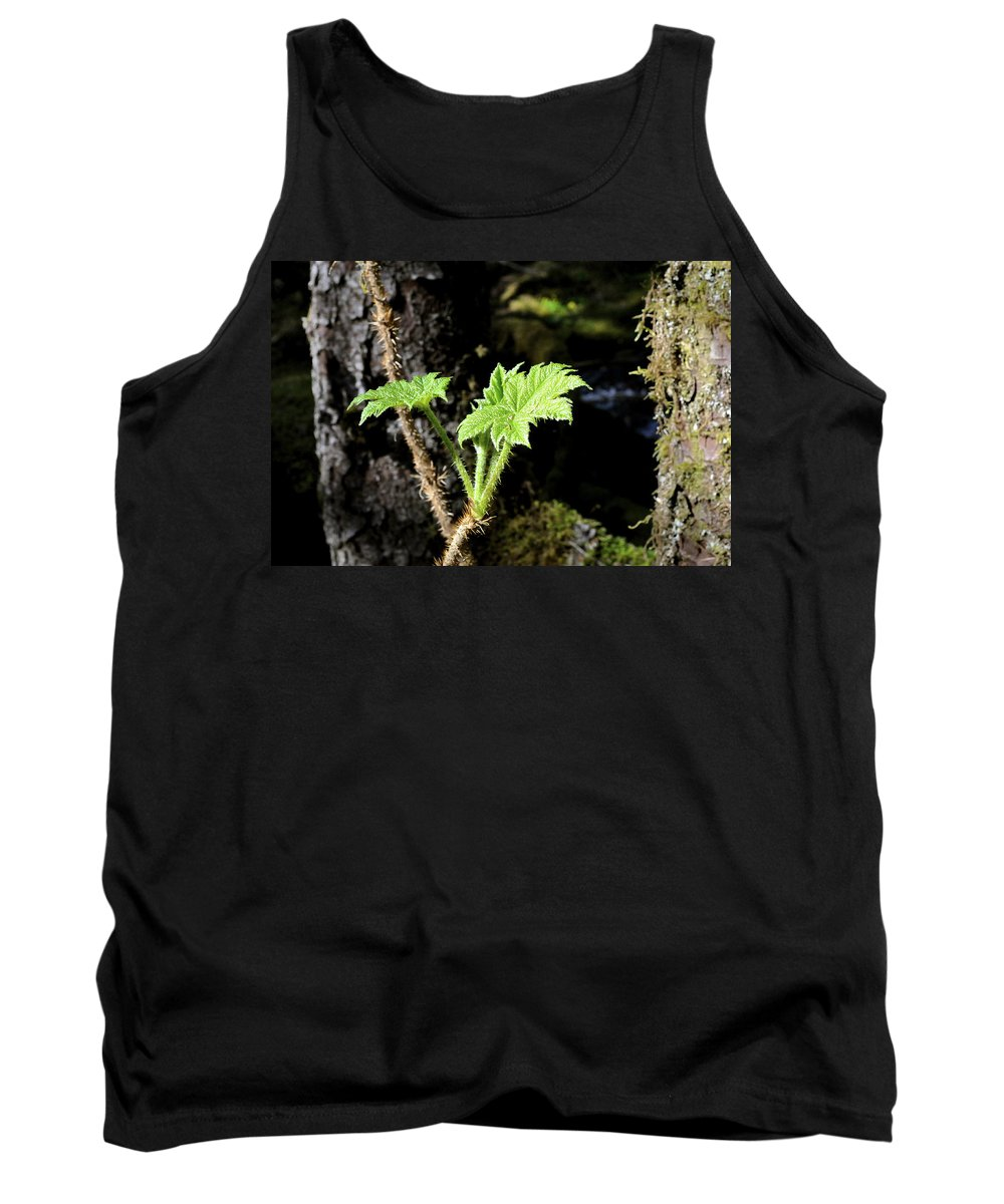 Devils Club Tank Top featuring the photograph Young Devils Club by Cathy Mahnke