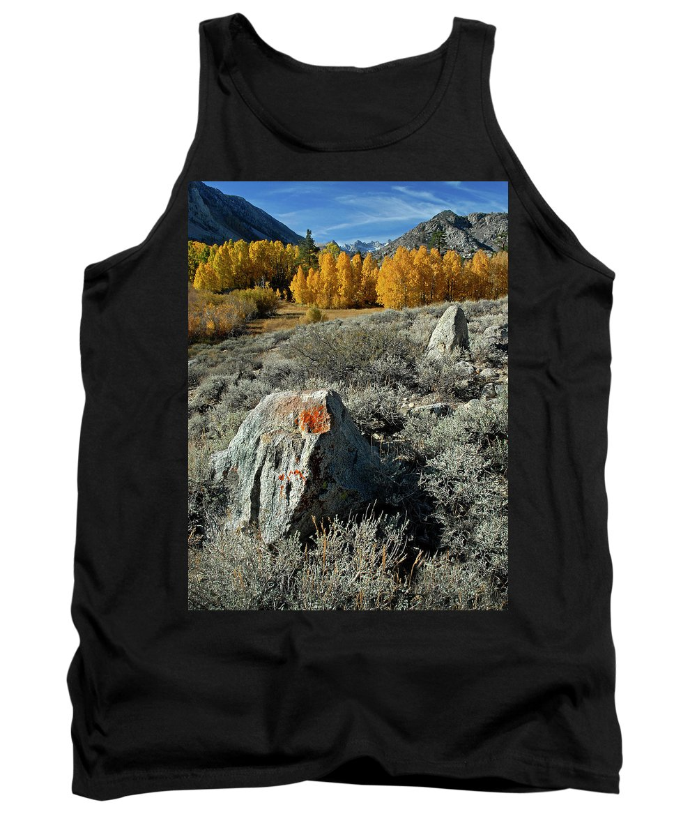 Aspens Tank Top featuring the photograph Aspens by Dave Mills
