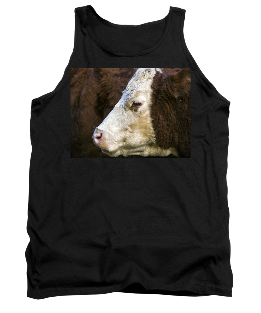 Animal Tank Top featuring the photograph Calf Portrait by Derek Holzapfel