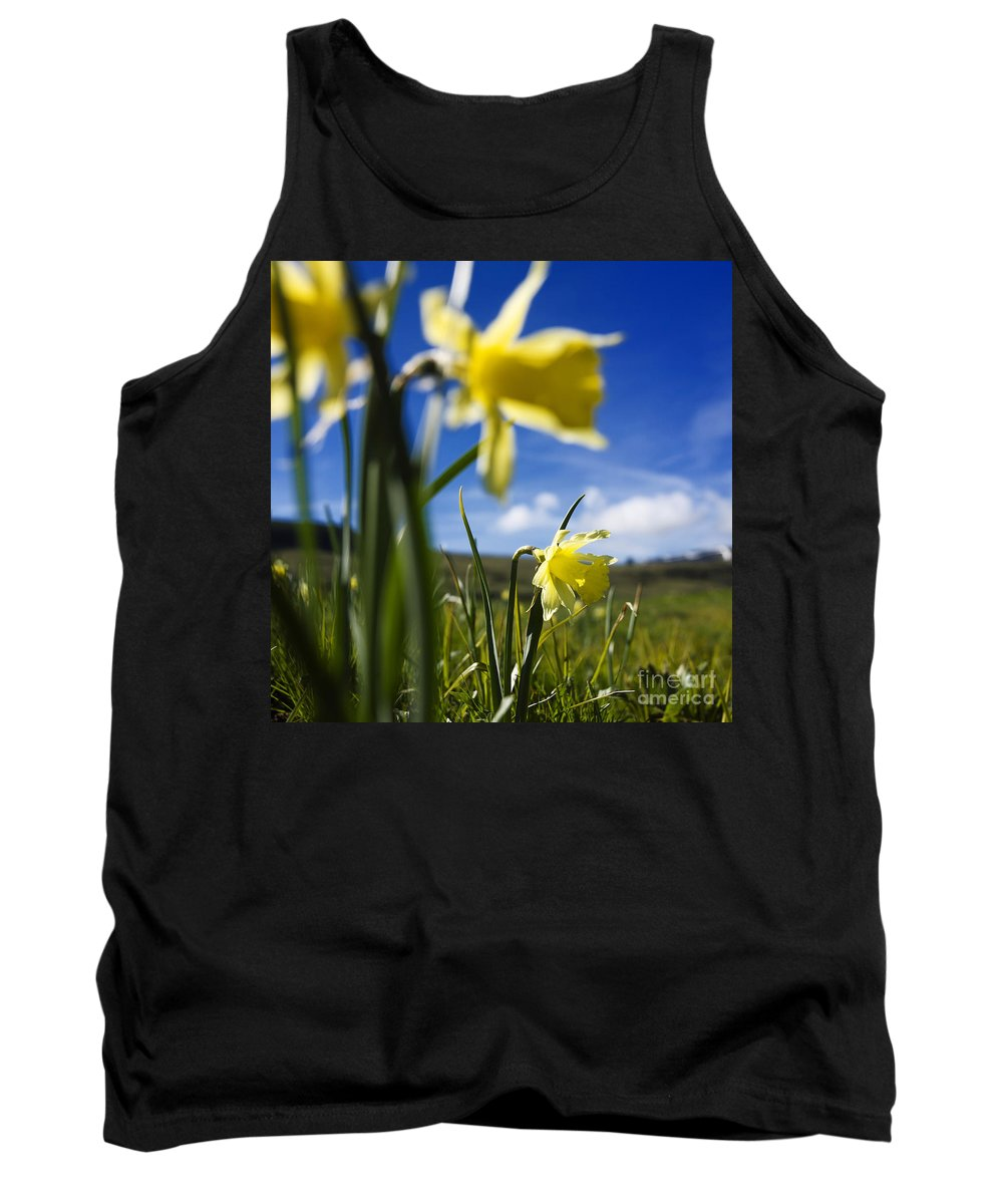Yellow Tank Top featuring the photograph Daffodils In Cezallier. Auvergne. France. Europe by Bernard Jaubert