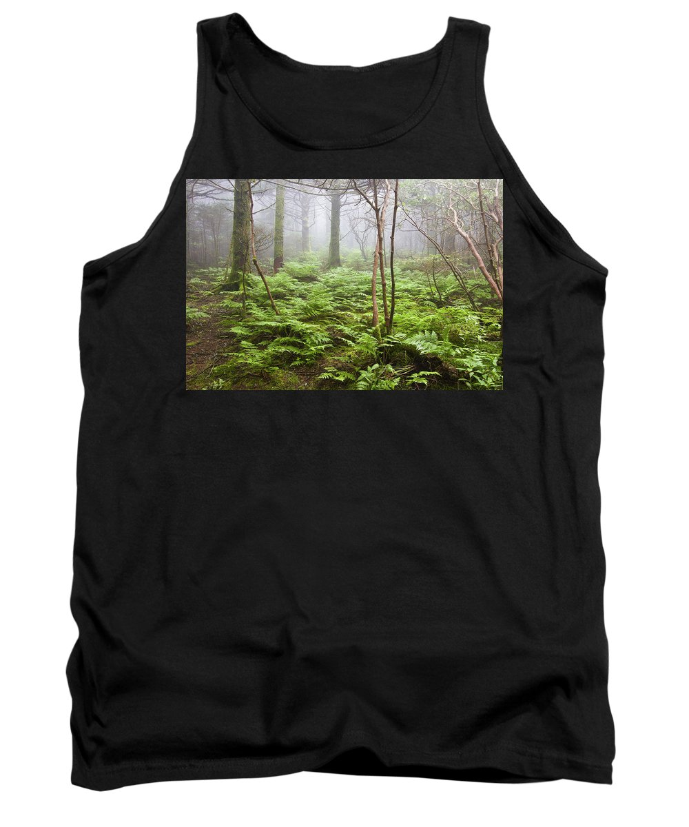 Roan Mountain Tank Top featuring the photograph Forest Ferns On A Foggy Morning by Bill Swindaman