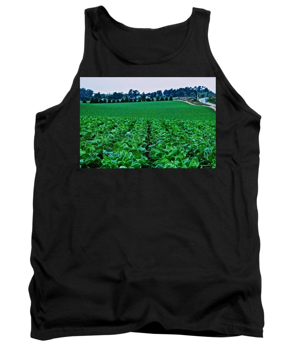 Cabbage Tank Top featuring the photograph Fresh Cabbage by Eric Tressler