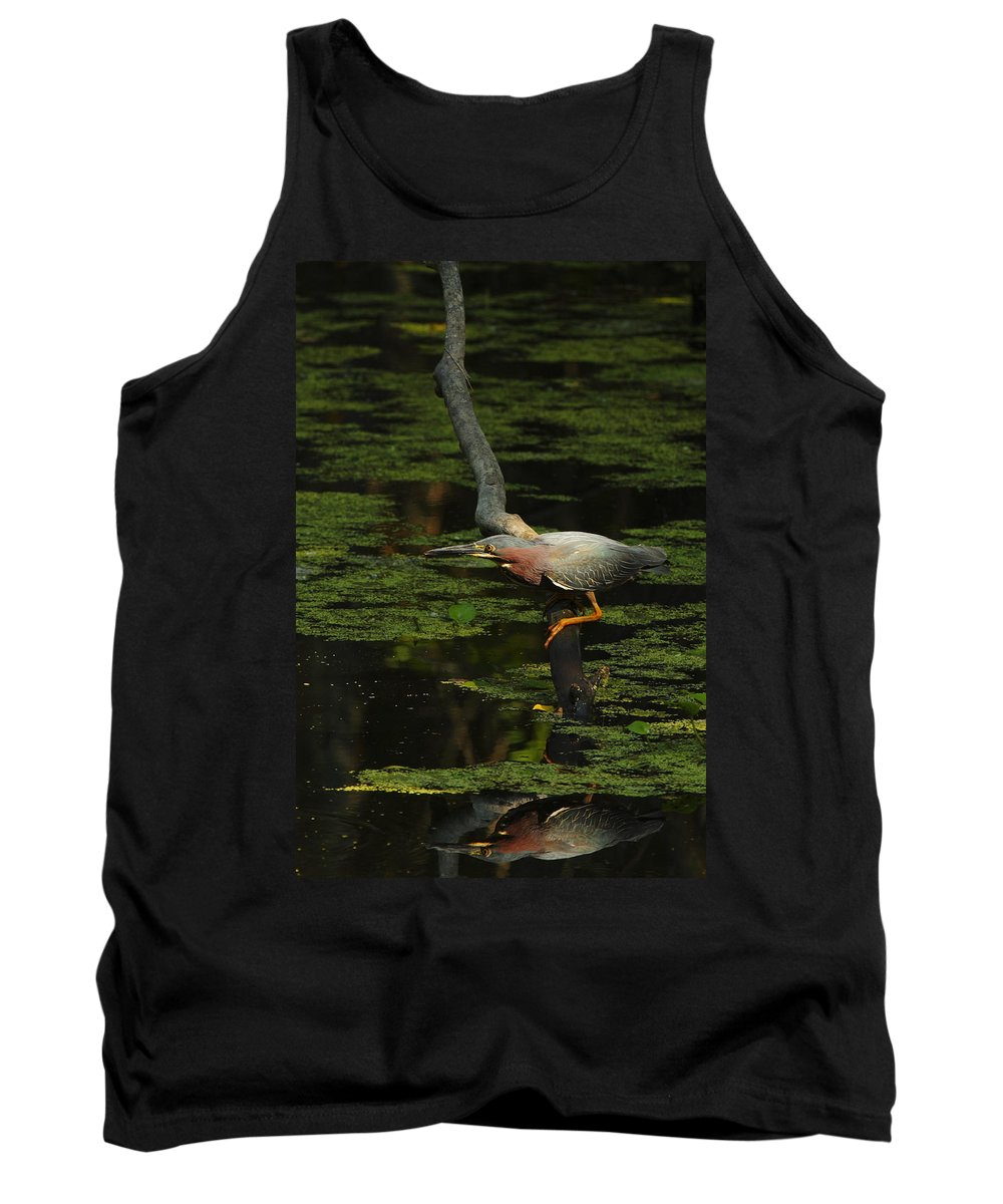 Green Heron Tank Top featuring the photograph Green Heron by Andrew McInnes