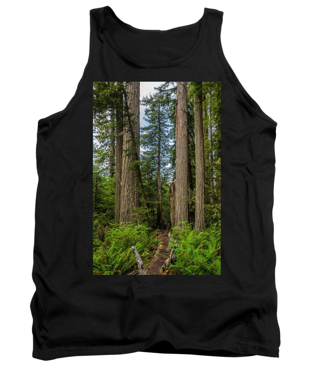 Redwoods Tank Top featuring the photograph Group Of Redwoods by Greg Nyquist
