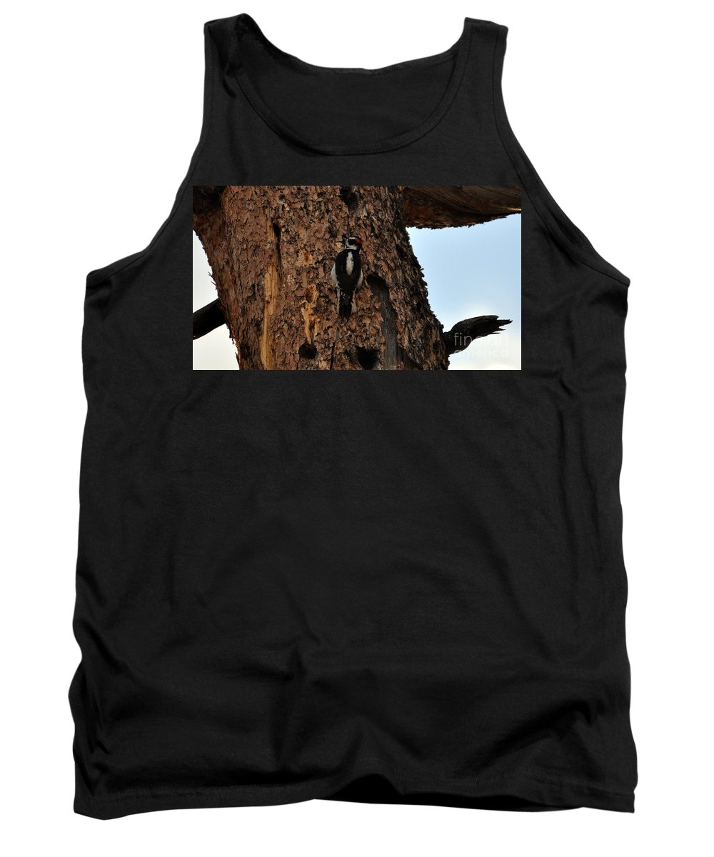 Bird Tank Top featuring the photograph Hairy Woodpecker On Pine Tree by Dorrene BrownButterfield