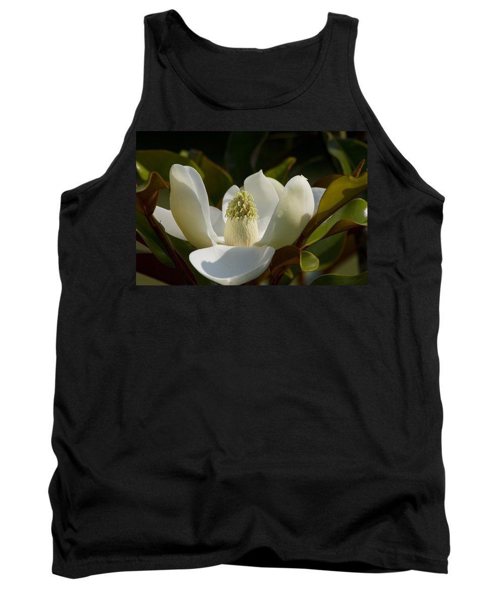 Magnolia Macrophylla Tank Top featuring the photograph Magnificent Alabama Magnolia Blossom by Kathy Clark