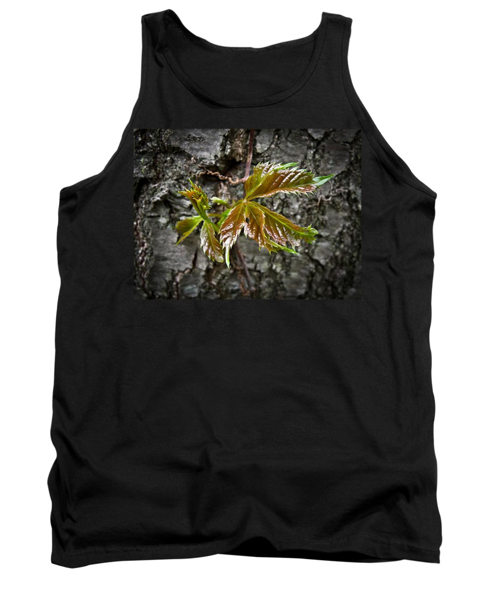 Macro Tank Top featuring the photograph New Life by Jiayin Ma