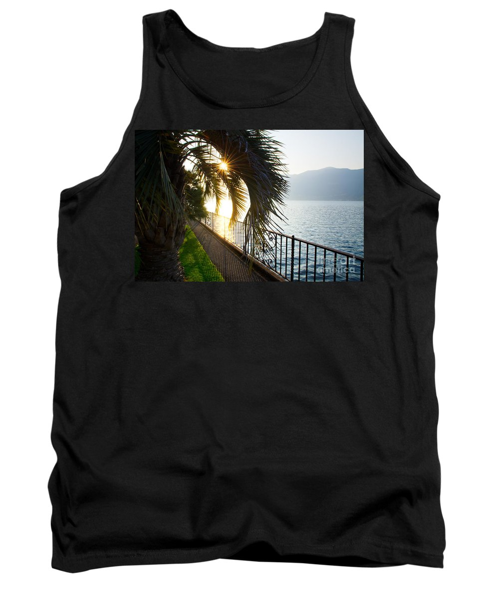 Palm Tank Top featuring the photograph Palm Tree In Backlight by Mats Silvan