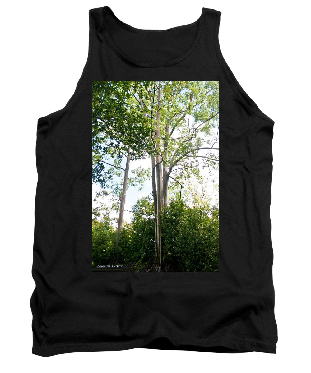 Interior Design Tank Top featuring the photograph Rainbow Eucalyptus by Paulette B Wright