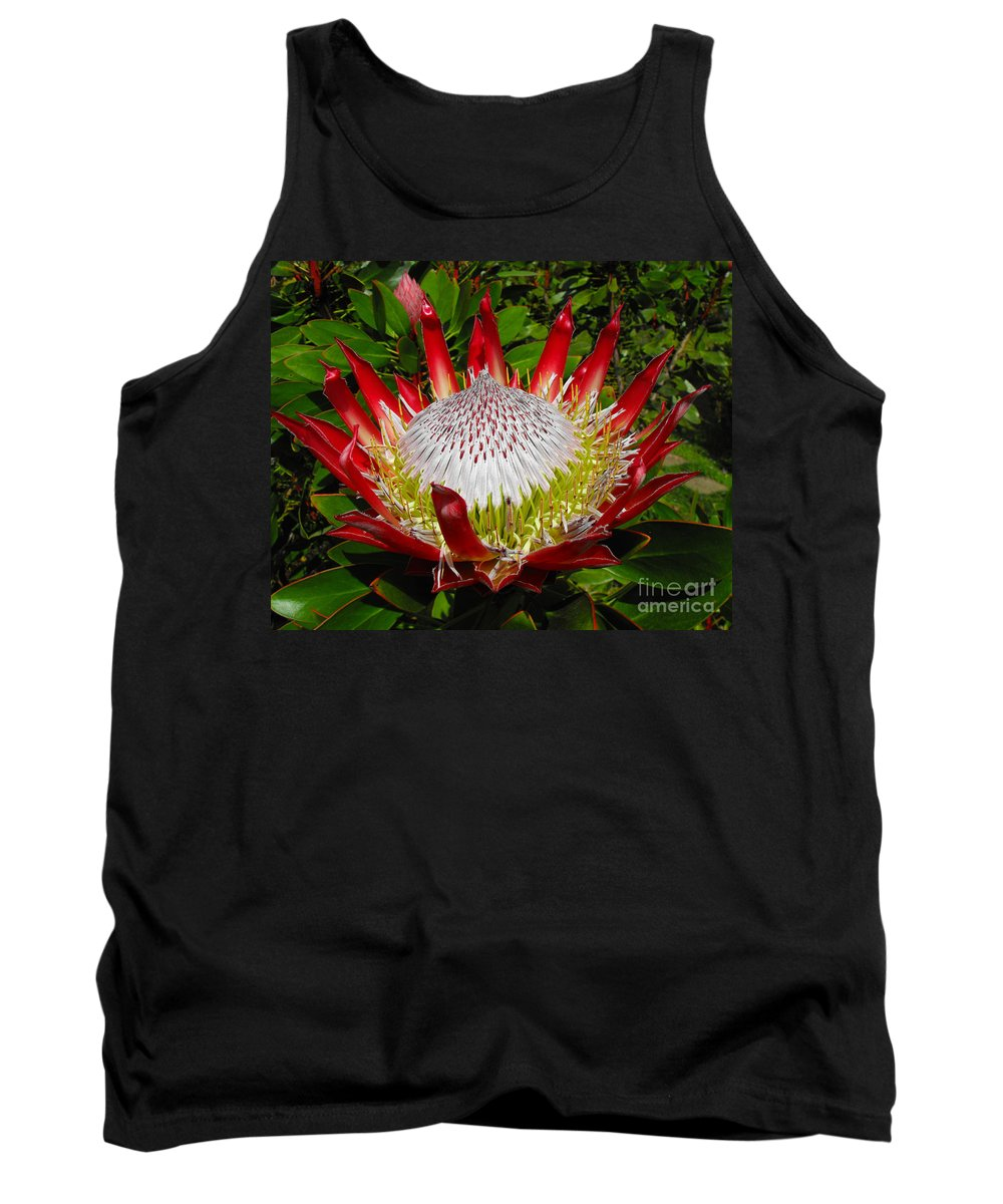 Protea Tank Top featuring the photograph Red King Protea by Rebecca Margraf