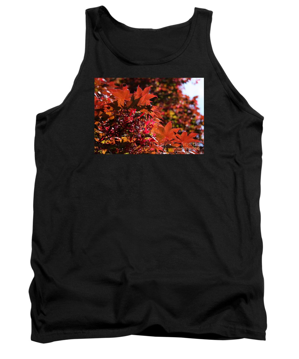 Leaves Tank Top featuring the photograph Sunlight Autumn Leaves by Christiane Schulze Art And Photography