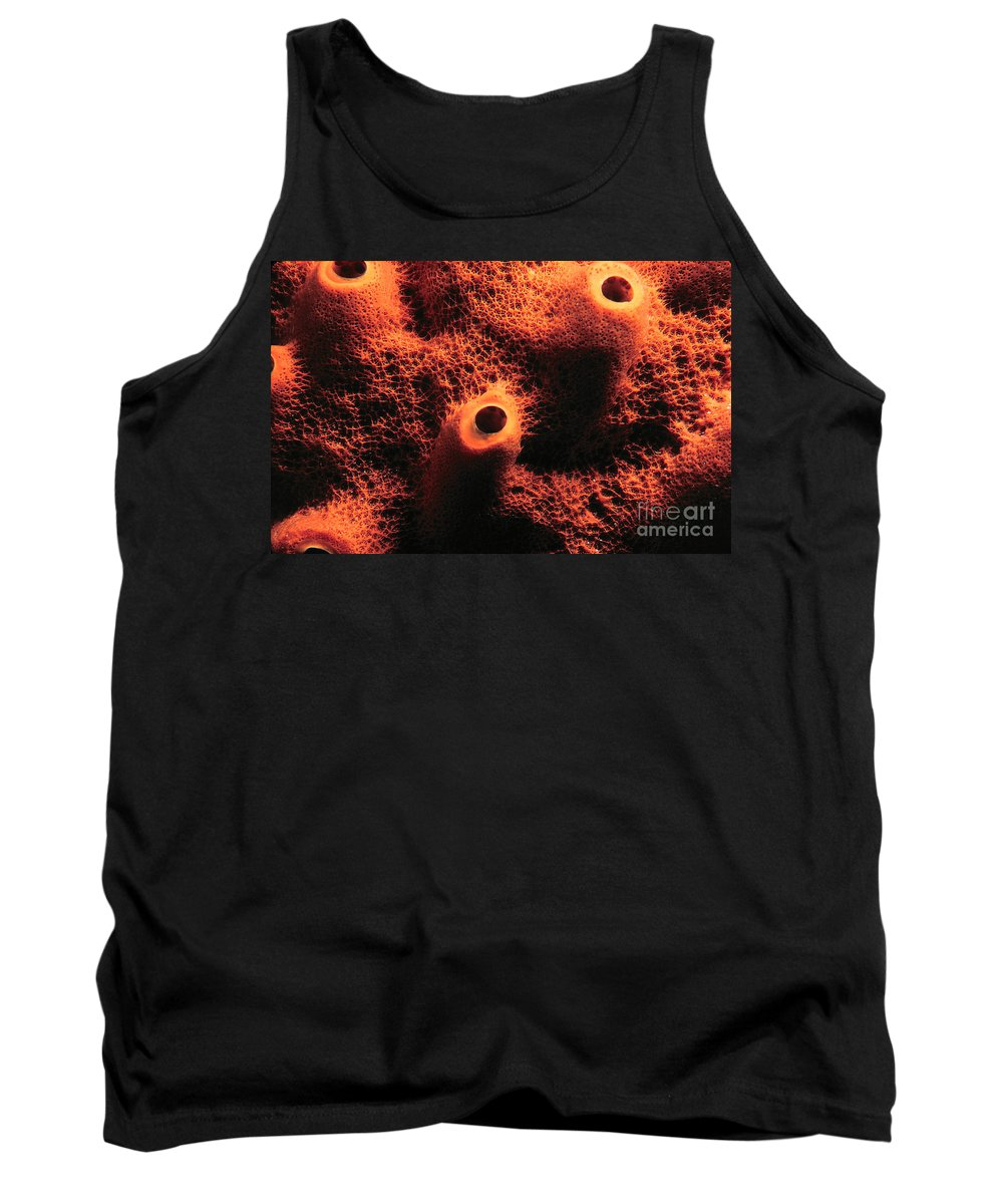 Sponge Tank Top featuring the photograph The Sponge by Mike Nellums