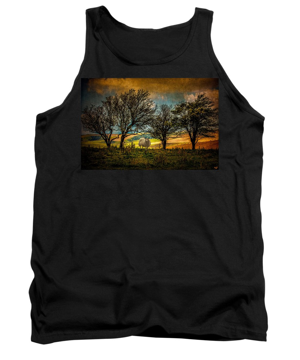 Sheep Tank Top featuring the photograph Up On The Sussex Downs In Autumn by Chris Lord