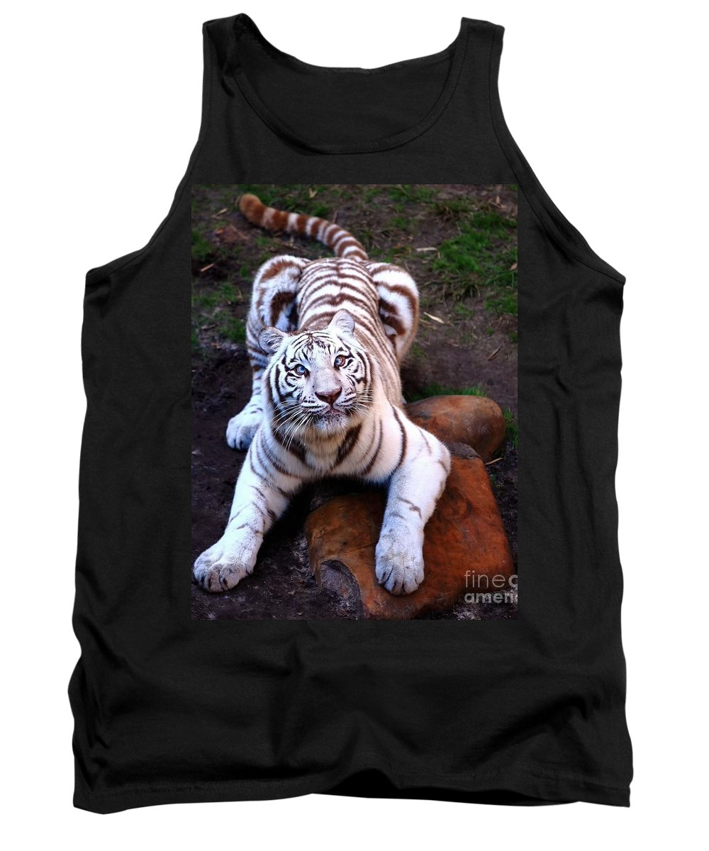 Siberia Tank Top featuring the photograph White Tiger 2 by Randy Matthews