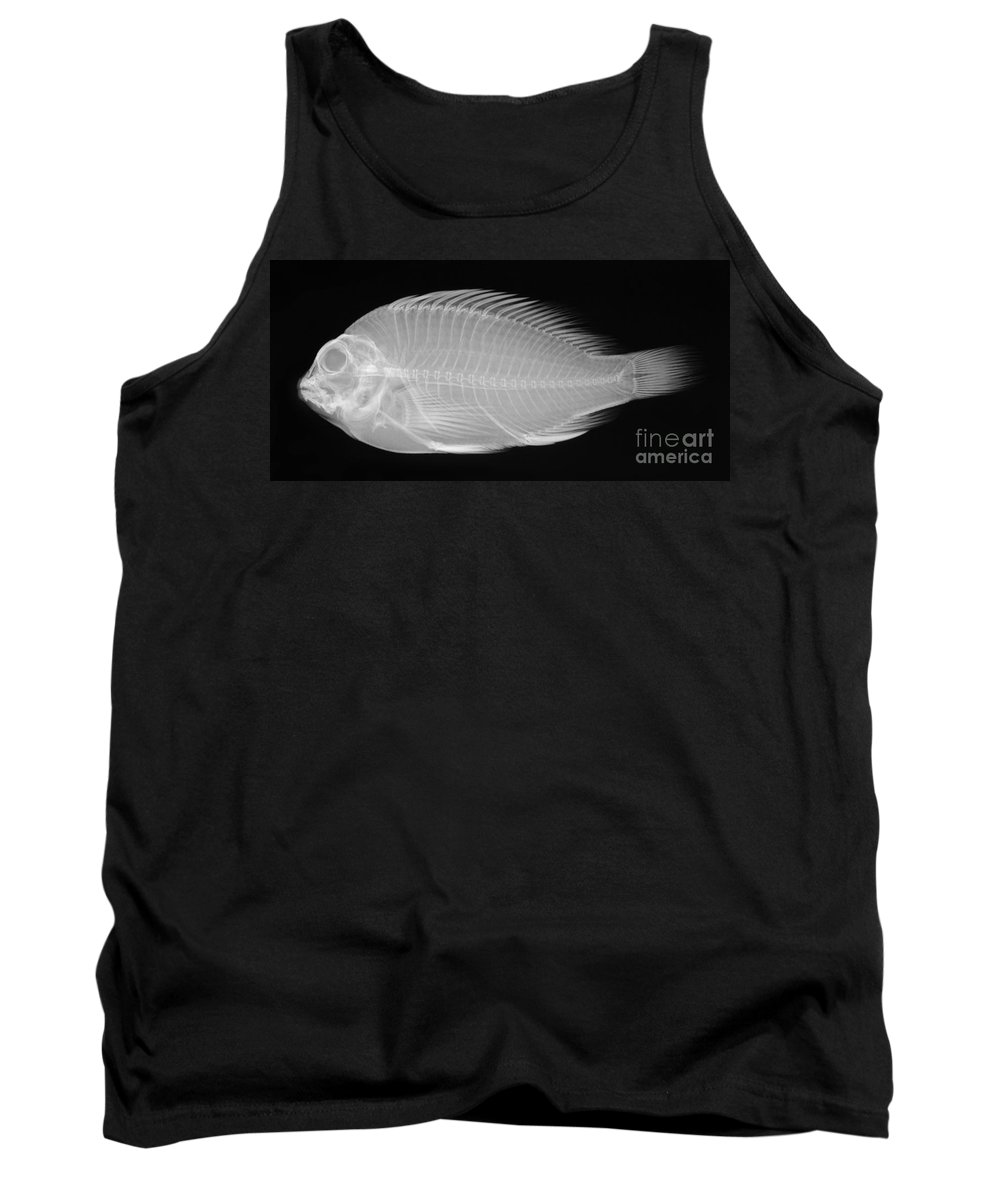 Radiograph Tank Top featuring the photograph X-ray Of A Flame Hawkfish by Ted Kinsman