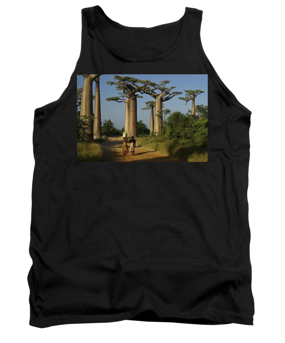 Madagascar Tank Top featuring the photograph Avenue Des Baobabs by Michele Burgess