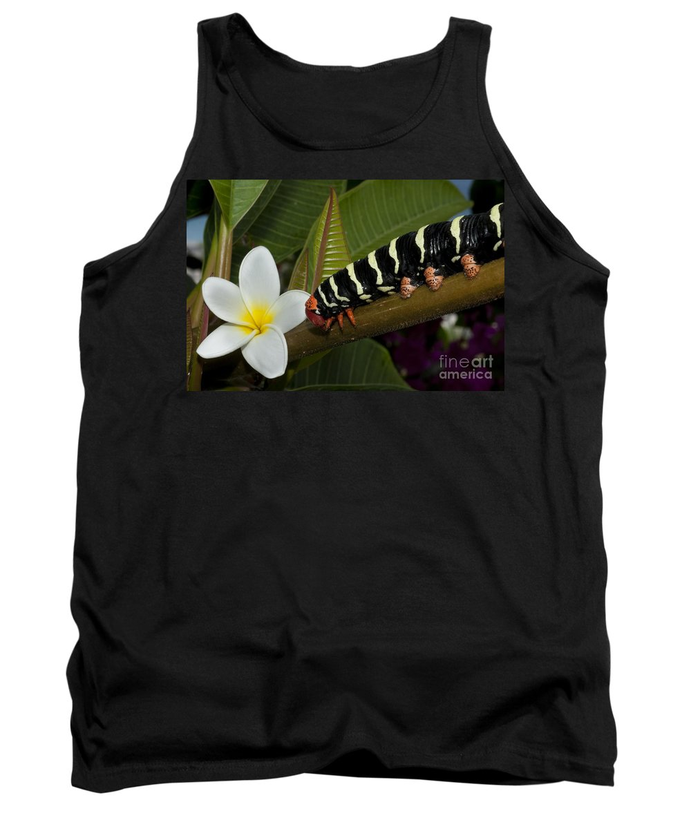 Animal Tank Top featuring the photograph Frangipani Tree And Caterpillar by Anthony Totah