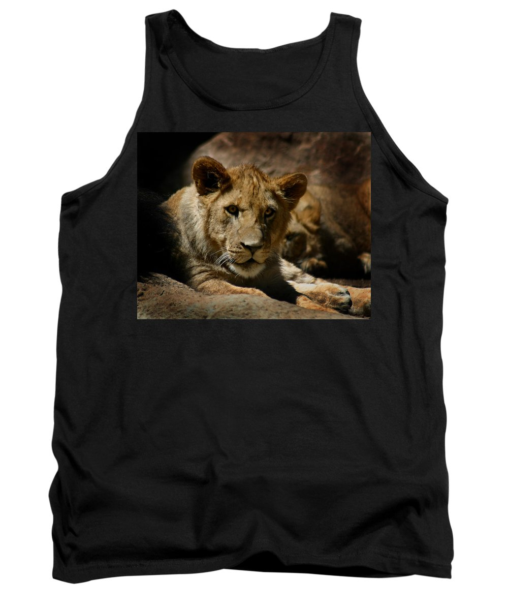 Lion Tank Top featuring the photograph Lion Cub by Anthony Jones