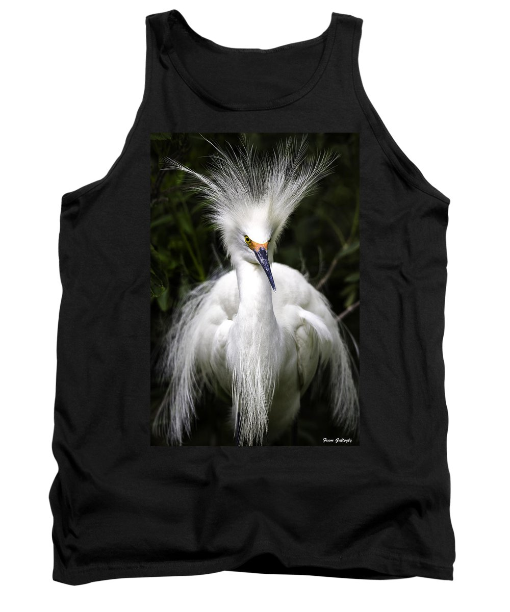 Snowy Egret Tank Top featuring the photograph Snowy Egret by Fran Gallogly