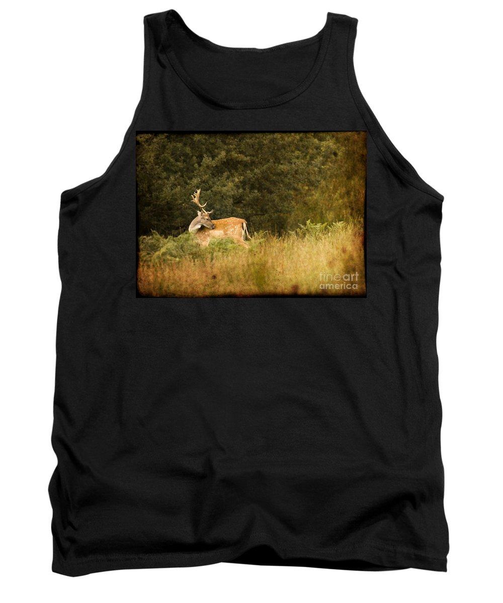 Fallow Deer Tank Top featuring the photograph Fallow Deer by Angel Ciesniarska