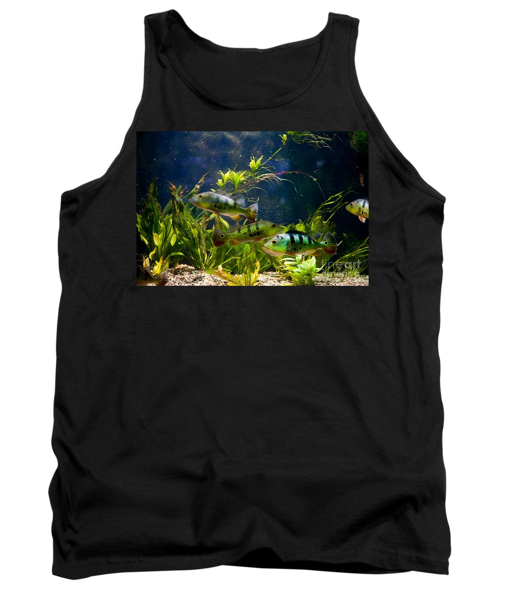 Zoo Tank Top featuring the photograph Aquarium Striped Fishes Group by Arletta Cwalina