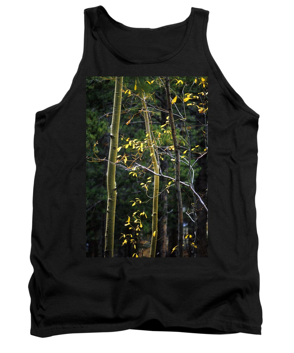 Aspen Tank Top featuring the photograph Aspen Grove by Jerry McElroy