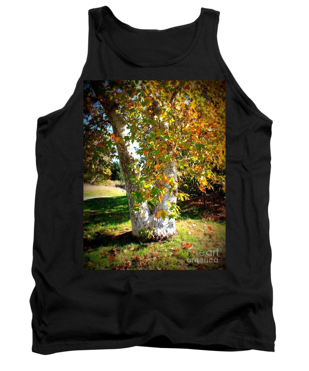 Autumn Tree Tank Top featuring the photograph Autumn Sycamore Tree by Carol Groenen