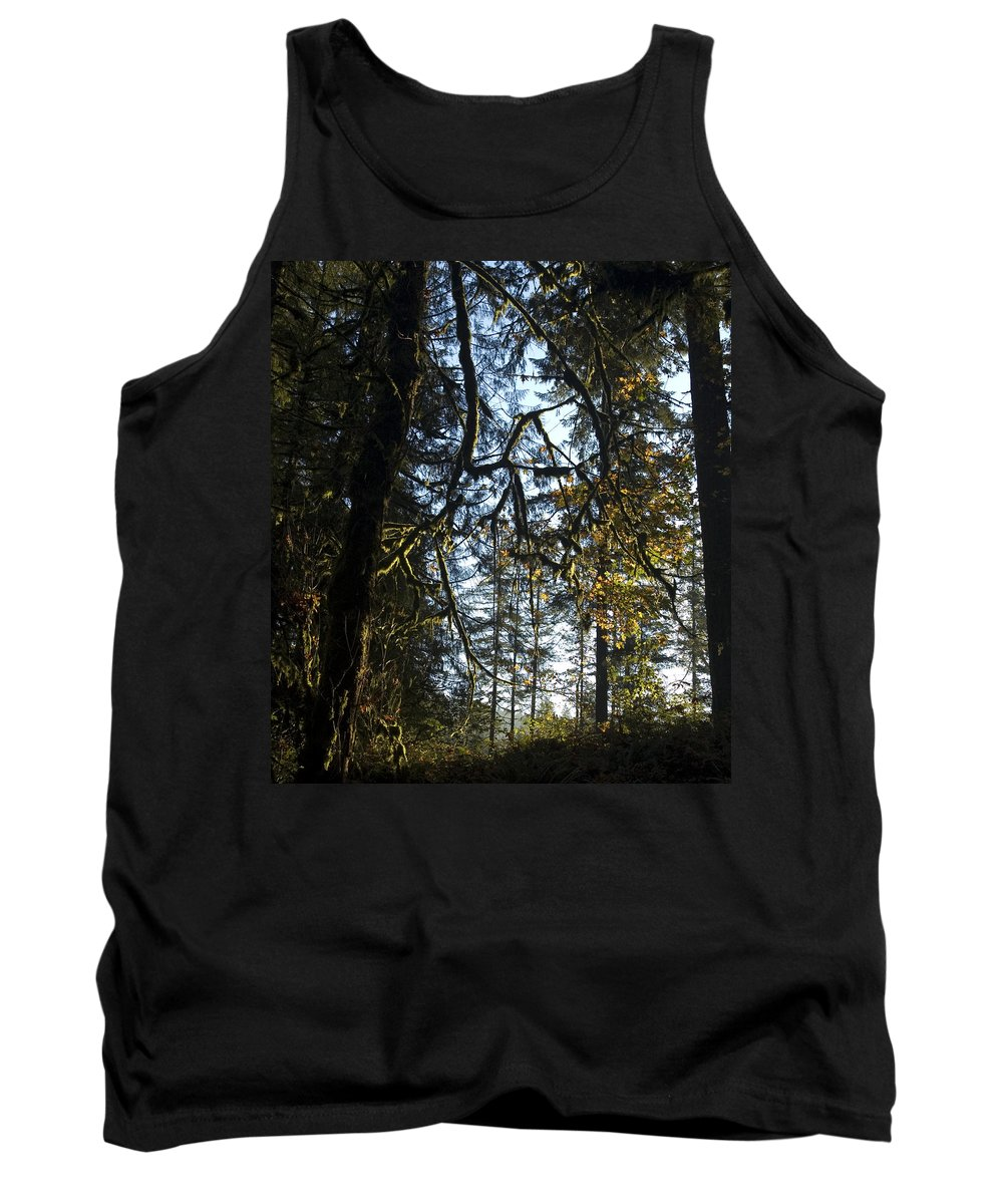 Trees Tank Top featuring the photograph Back Lit by Sara Stevenson