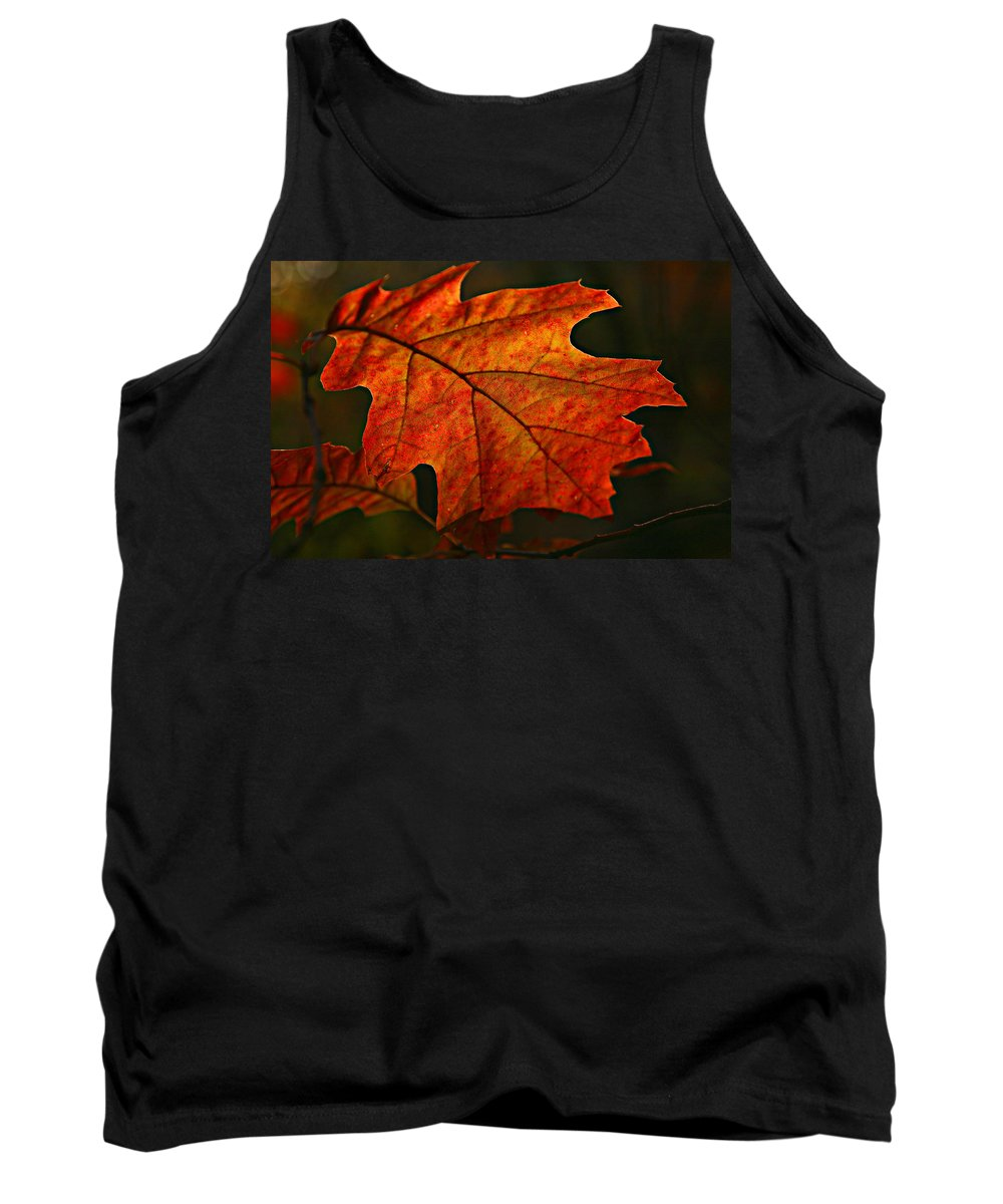 Fall Oak Leaf Leaves Orange Red Tank Top featuring the photograph Backlit Leaf by Shari Jardina