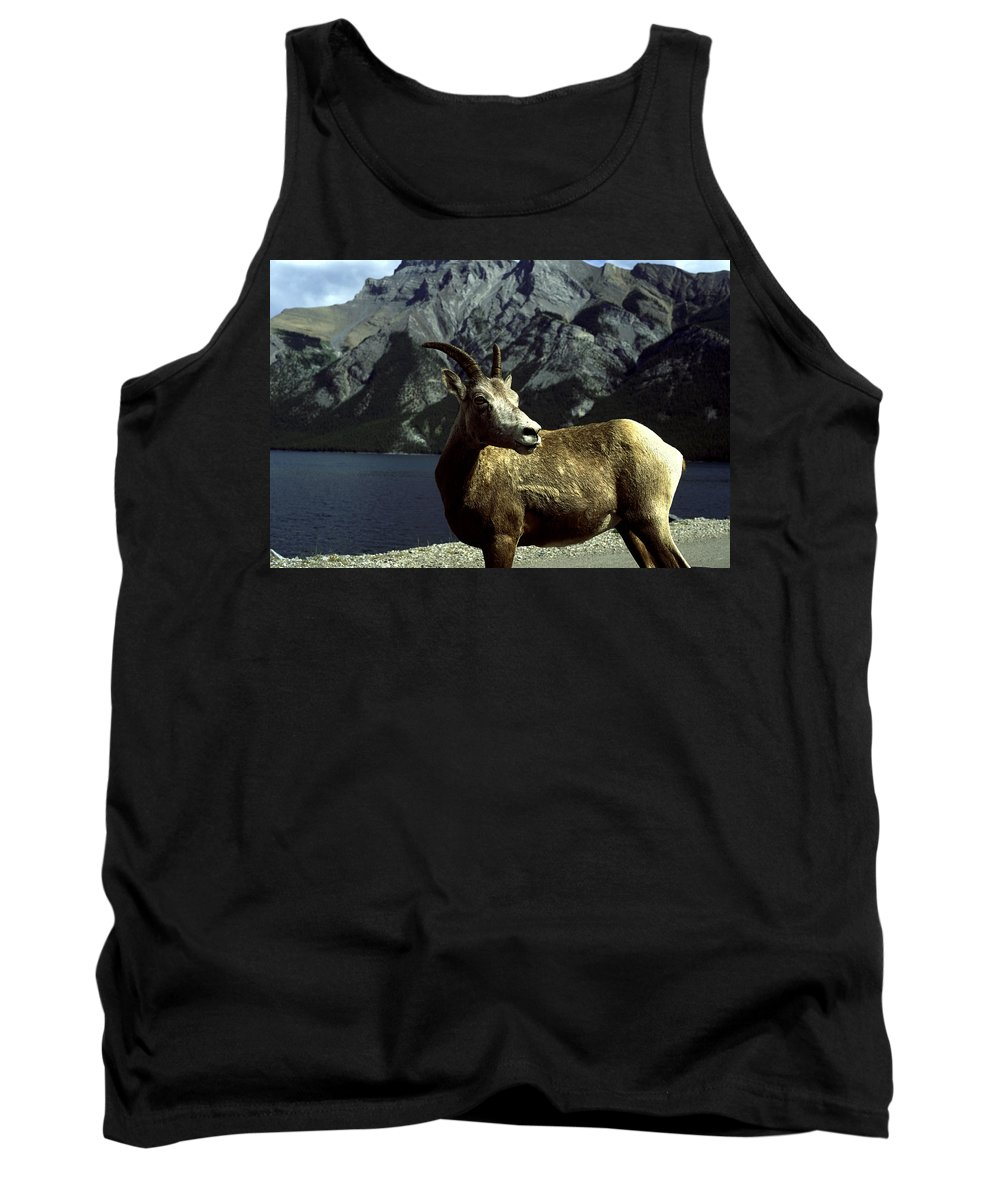 Bighorn Sheep Tank Top featuring the photograph Bighorn Sheep by Sally Weigand