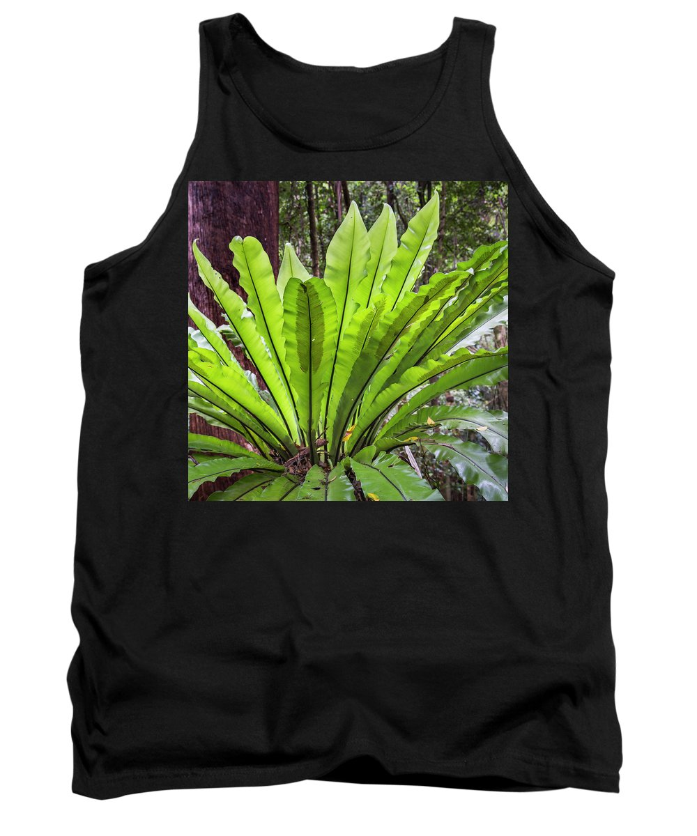 Australia Tank Top featuring the photograph Bold Fronds 8 by Stuart Mackenzie