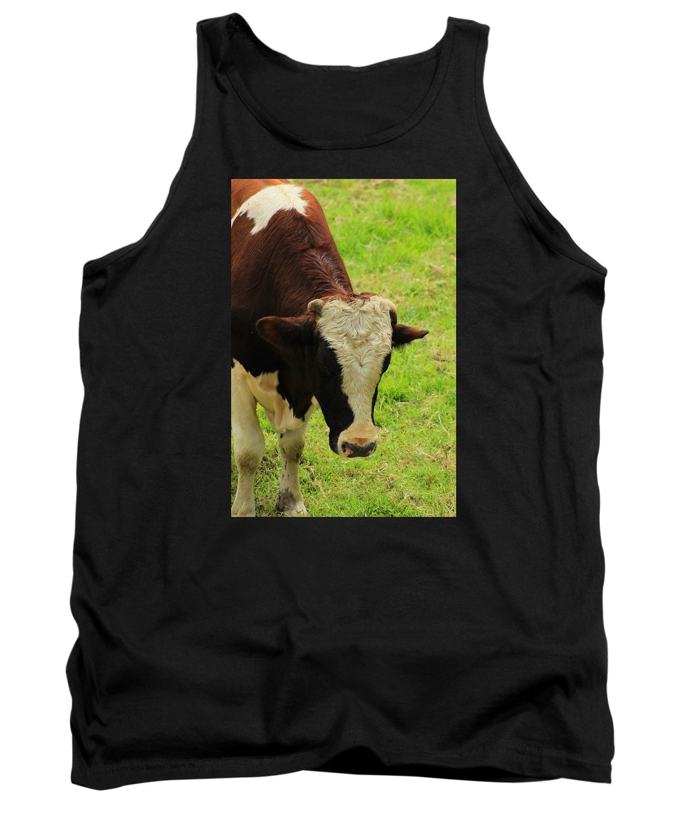 Bull Tank Top featuring the photograph Brown And White Bull On A Farm by Robert Hamm
