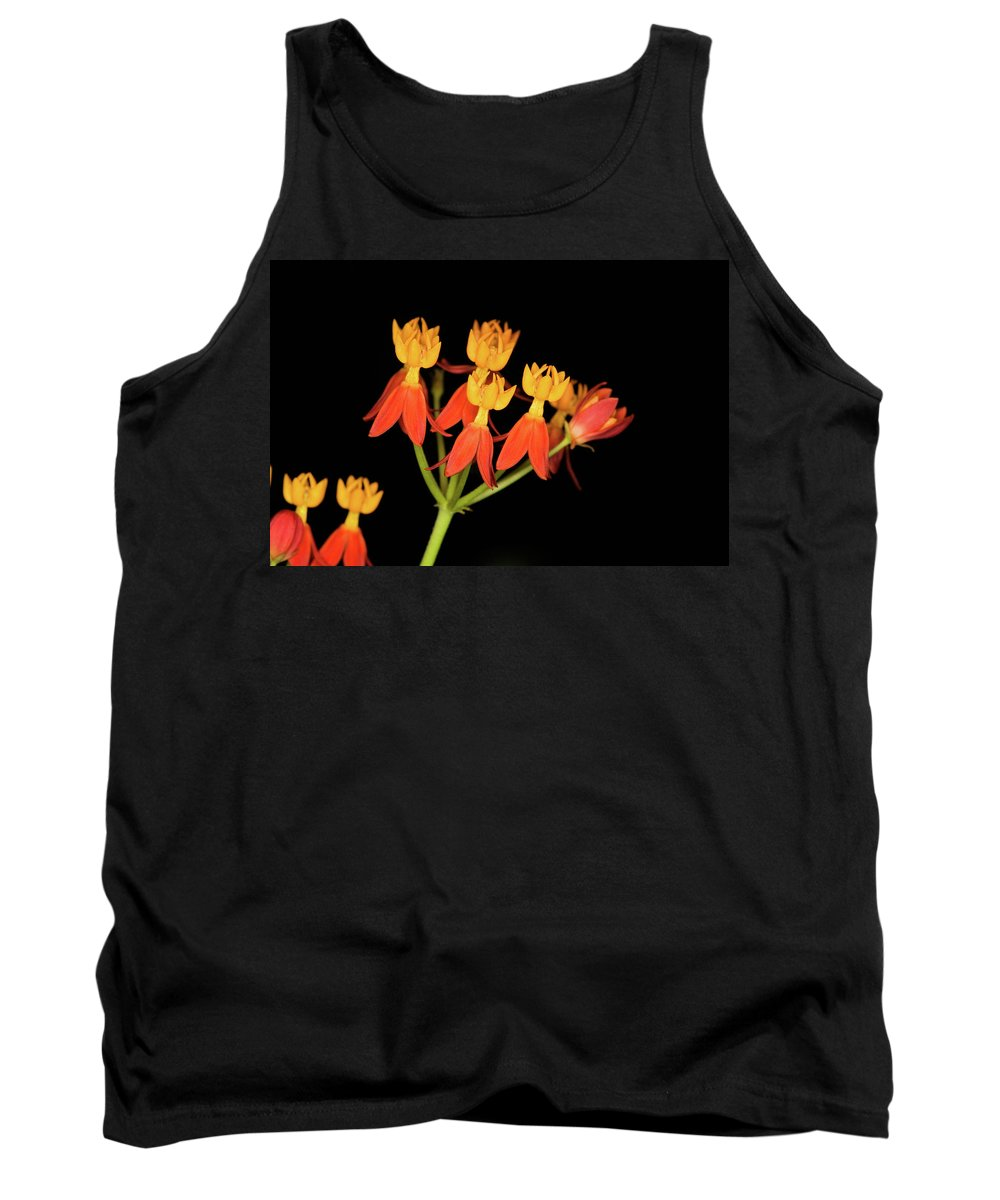 Tropical Milkweed Tank Top featuring the photograph Butterfly Weed by Diane Macdonald