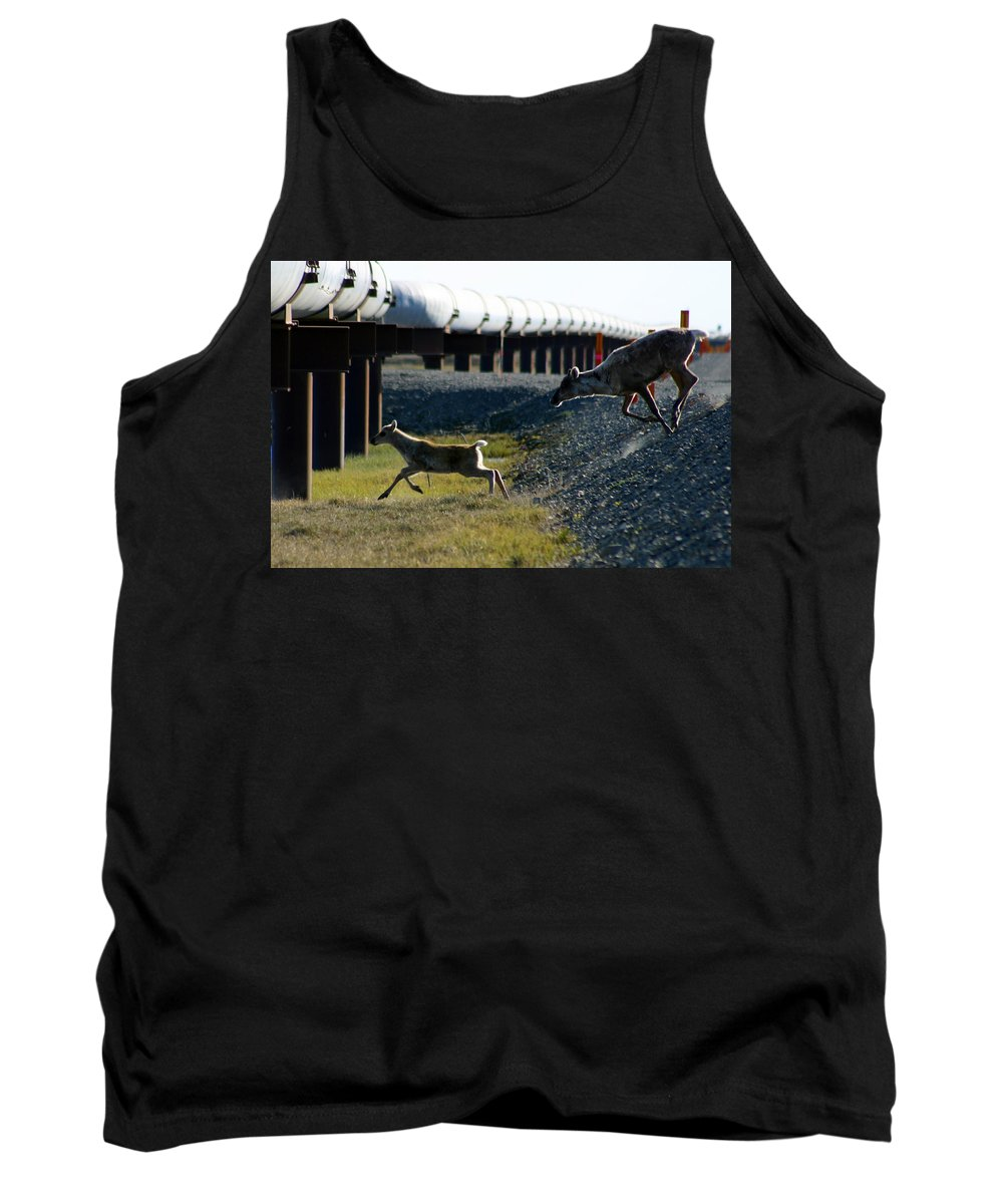 Caribou Tank Top featuring the photograph Caribou Cow And Fawn by Anthony Jones
