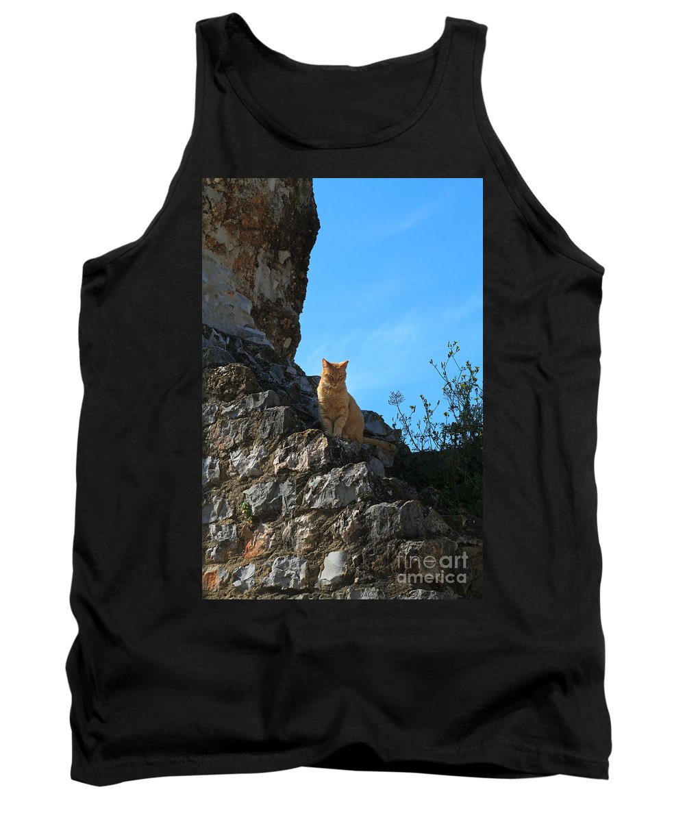 Cat Tank Top featuring the photograph Castle Cat by Louise Heusinkveld