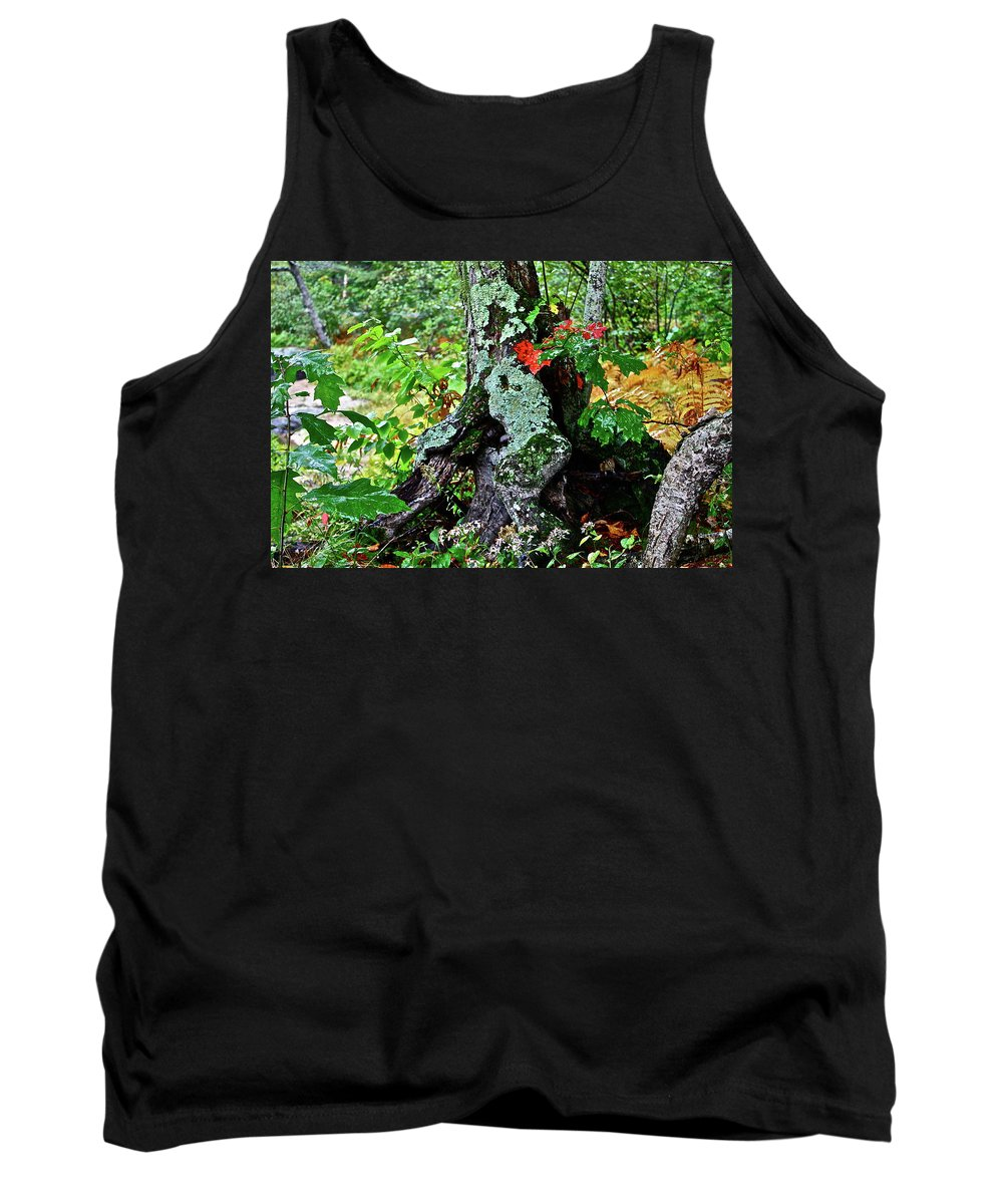 Tree Tank Top featuring the photograph Colorful Stump by Diana Hatcher