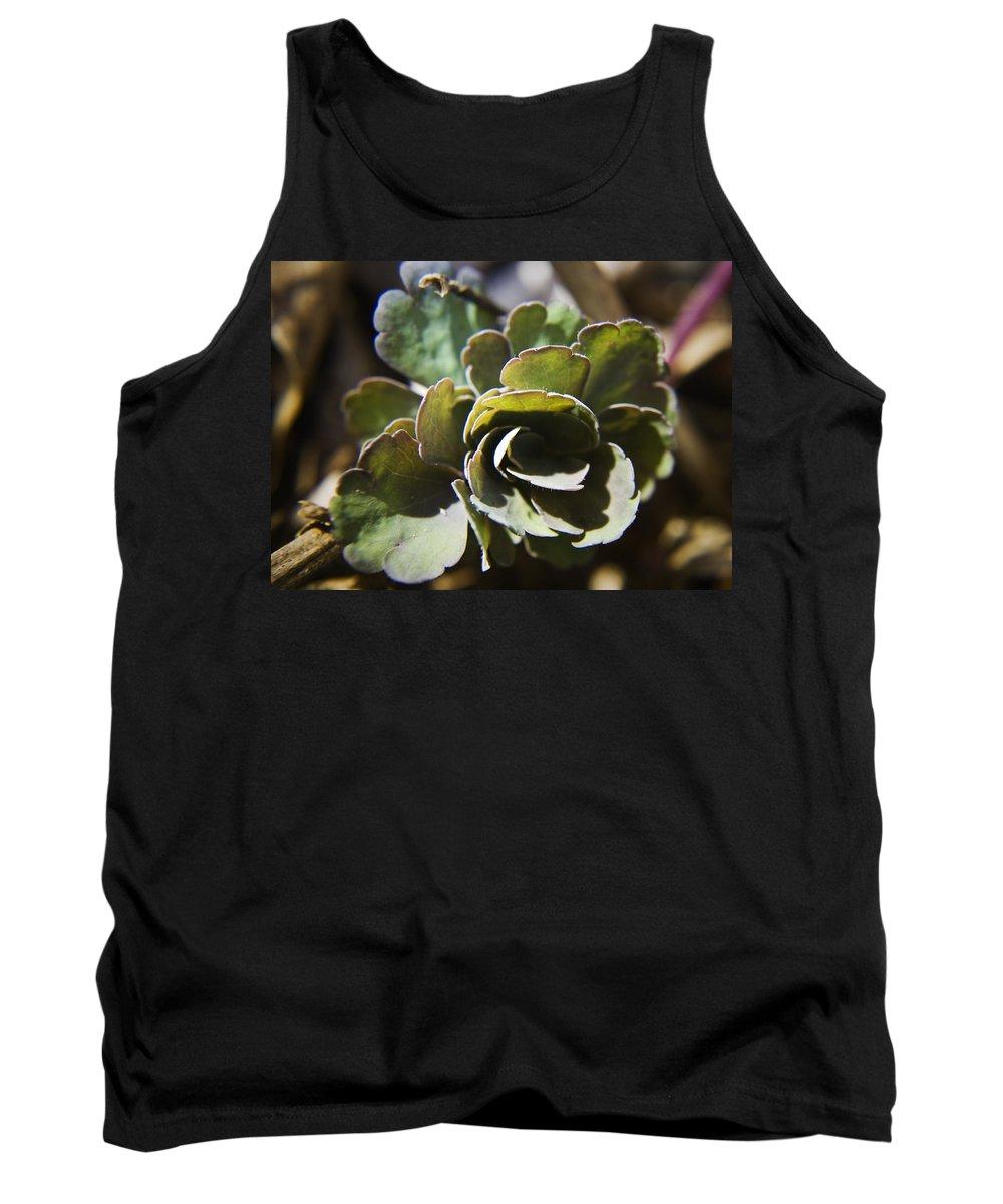 Aquilegia Tank Top featuring the photograph Columbine Foliage by Teresa Mucha