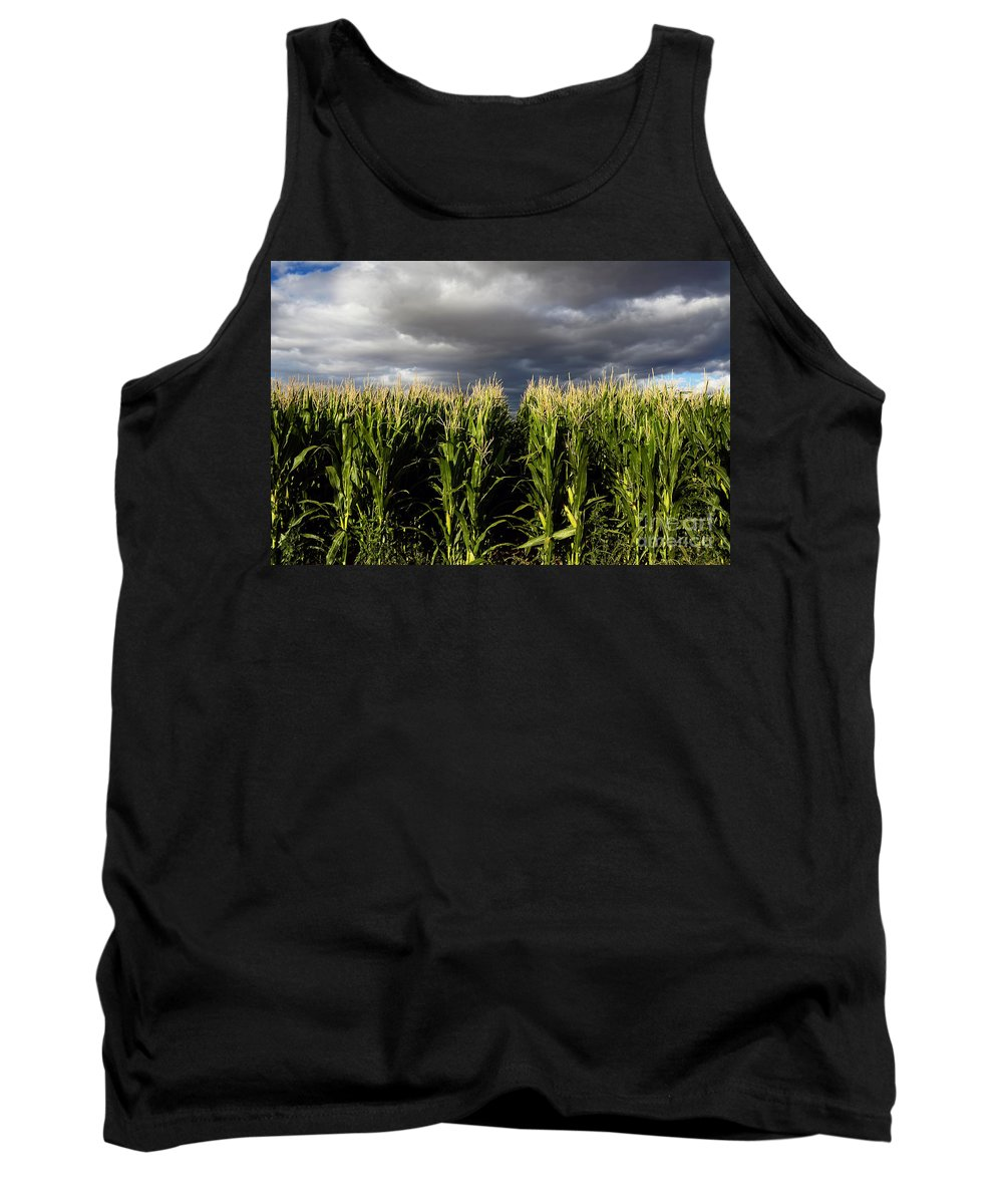 Corn Tank Top featuring the photograph Corn Field. by W Scott McGill