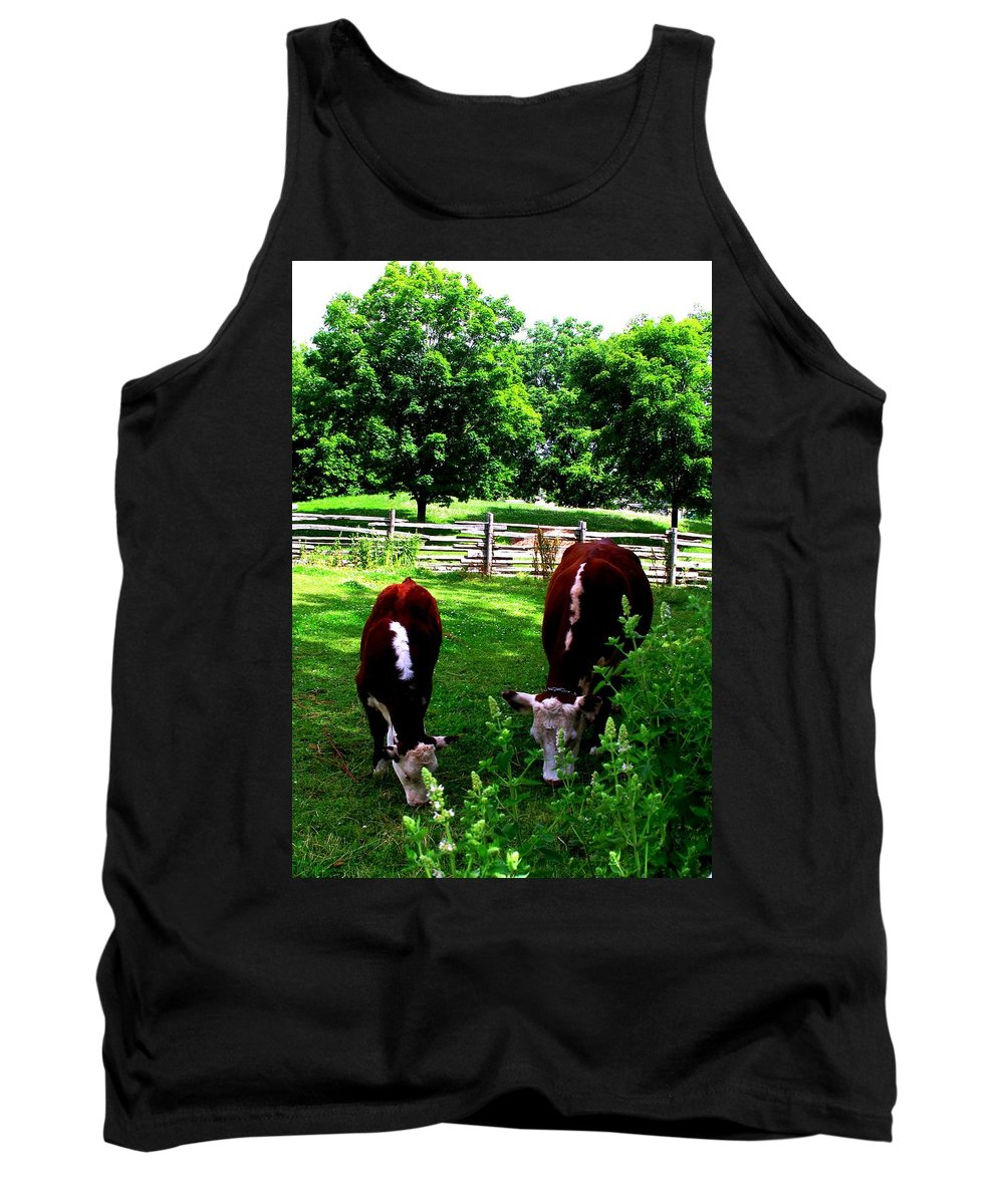 Cows Tank Top featuring the photograph Cows Grazing by Ian MacDonald