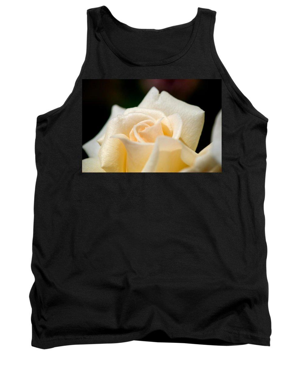 Lisa Knechtel Tank Top featuring the photograph Cream Rose Kisses by Lisa Knechtel