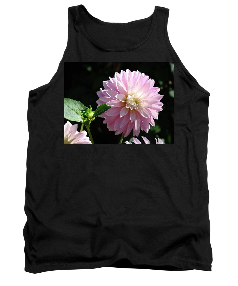 Dahlia Tank Top featuring the photograph Dahlia Flower Art Pink Dahlias Giclee Art Prints Baslee Troutman by Baslee Troutman