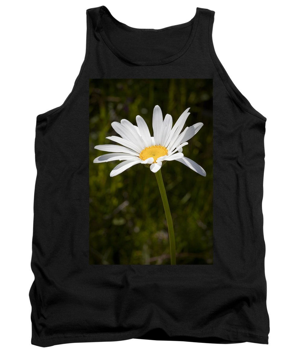 Daisy Tank Top featuring the photograph Daisy 3 by Kelley King