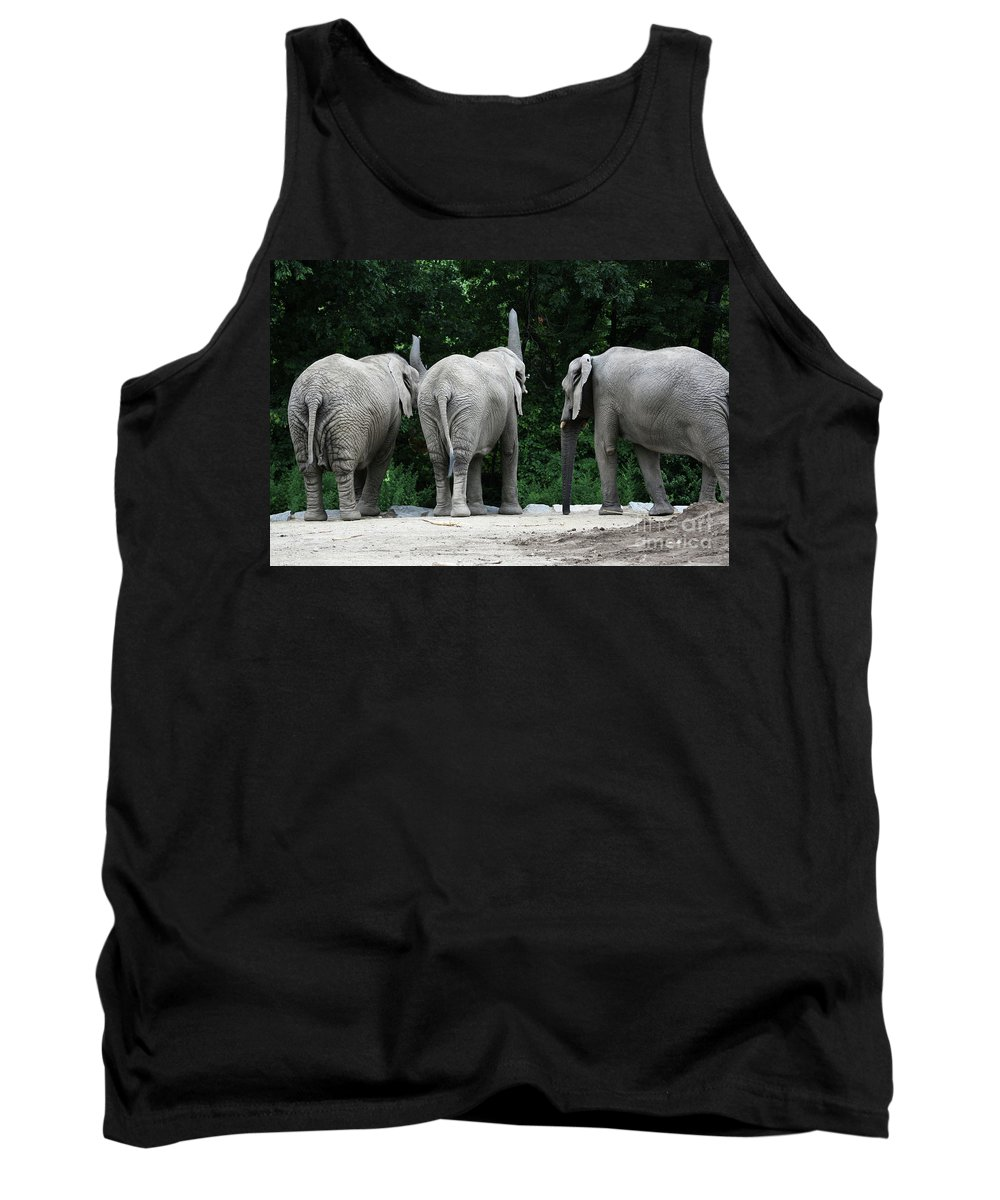 Elephant Tank Top featuring the photograph Elephant Trio by Karol Livote