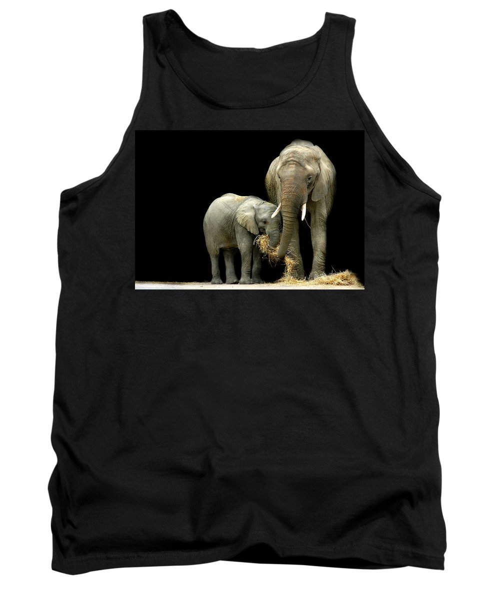 Elephant Tank Top featuring the photograph Feeding Time by Stephie Butler
