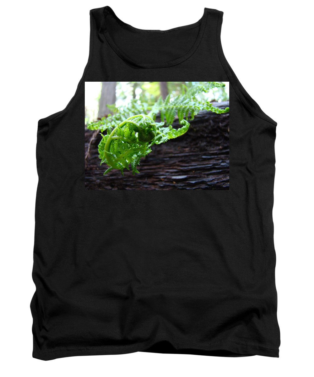 Fern Tank Top featuring the photograph Fern On Redwood Tree Art Print Baslee Troutman by Baslee Troutman