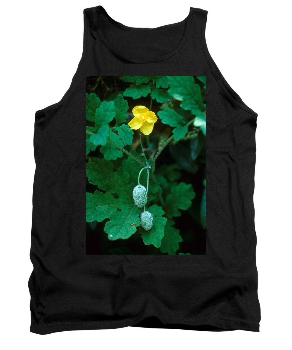 Flower Tank Top featuring the photograph Flower And Fruit by Laurie Paci
