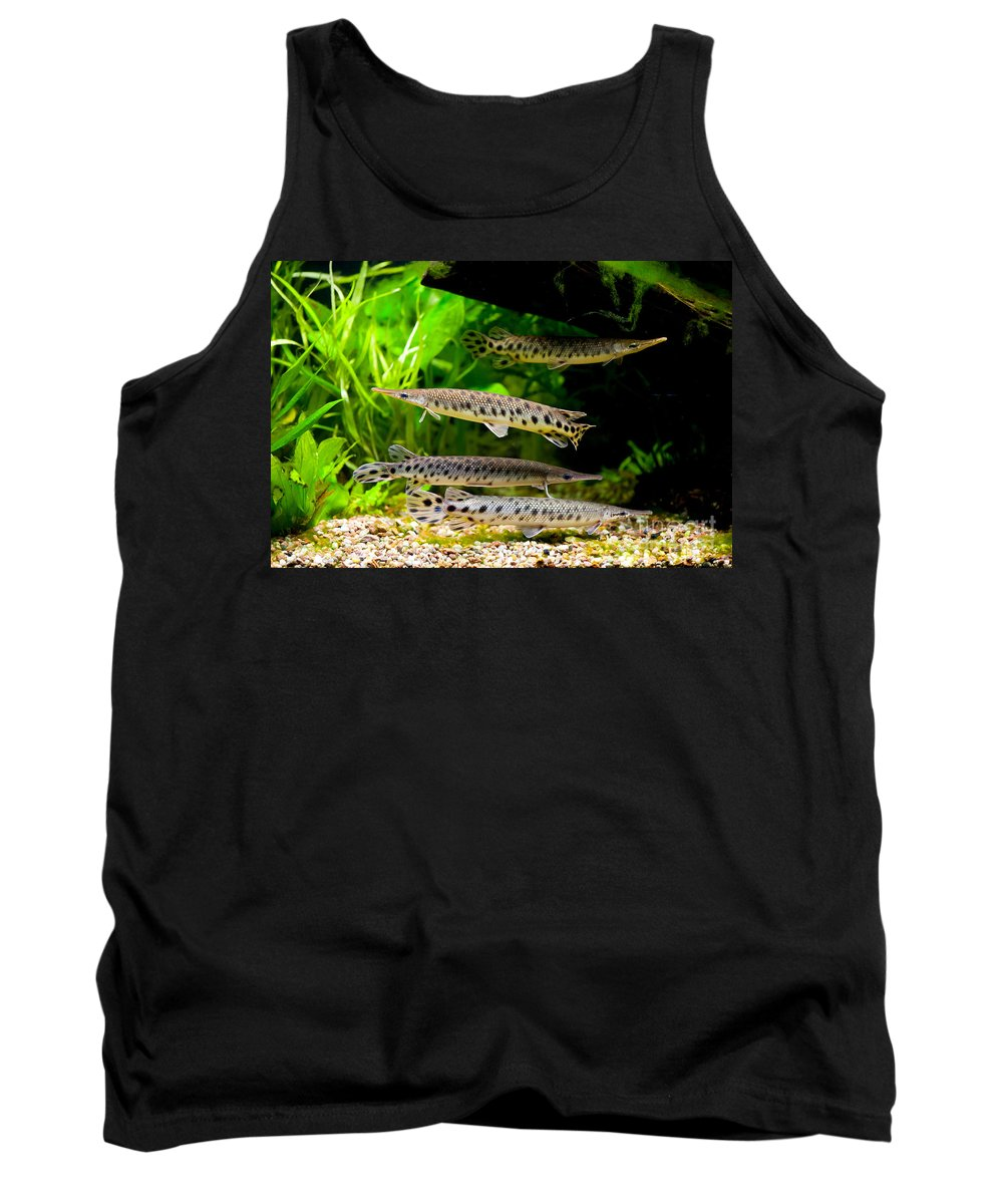 Zoo Tank Top featuring the photograph Four Aquarium Fishes In Zoo by Arletta Cwalina