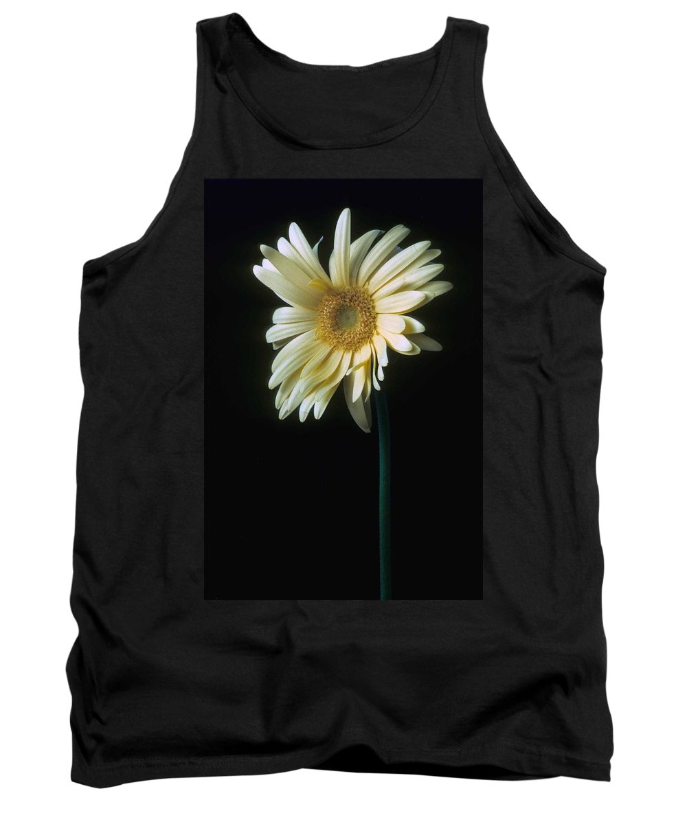 Gerber Tank Top featuring the photograph Gerber Daisy by Laurie Paci