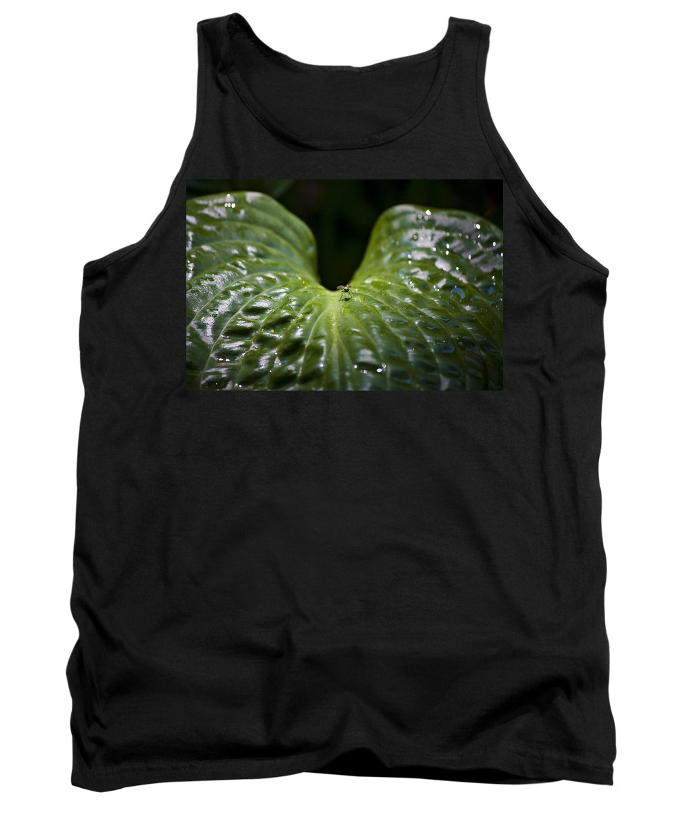 Hosta Tank Top featuring the photograph Getting A Drink by Teresa Mucha