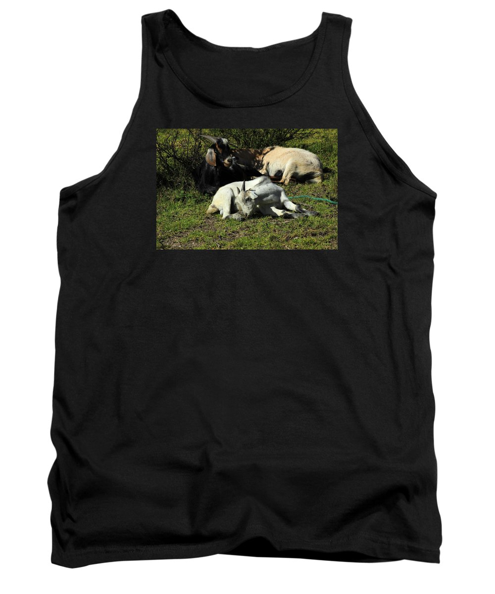 Goat Tank Top featuring the photograph Goats Lying Under A Bush by Robert Hamm